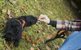 Alimentação pequena do cachorrinho fotografia de stock royalty free
