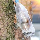 Alimentações selvagens do esquilo no inverno frio Fotografia de Stock Royalty Free