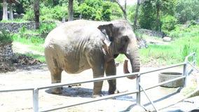 Alimenta el elefante de Asia en el parque zoológico de Tailandia almacen de metraje de vídeo