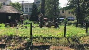 Alimentación de lémures en un parque zoológico en el día soleado del verano afuera almacen de metraje de vídeo