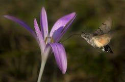 Alimentación de la mariposa Fotografía de archivo