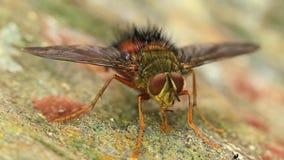 Alimentación de la mosca almacen de video