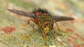 Alimentación de la mosca almacen de metraje de vídeo