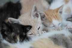 Alimentación de los gatitos Imágenes de archivo libres de regalías