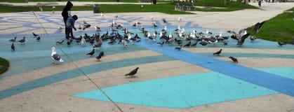 Alimentación de los pájaros Imagen de archivo libre de regalías