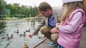 Alimentación de los patos en el lago almacen de metraje de vídeo