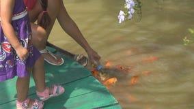 Alimentación de pescados de la mujer y de la hija desde una botella en una charca Muchos pescados almacen de metraje de vídeo