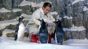 Alimentación de pingüinos Fotografía de archivo libre de regalías
