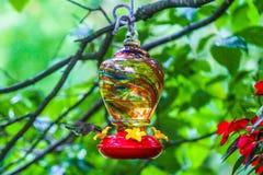 Alimentación del colibrí foto de archivo libre de regalías