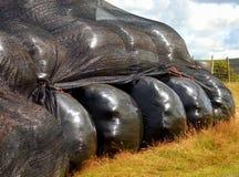 Alimentación del ganado del ensilaje Fotos de archivo libres de regalías