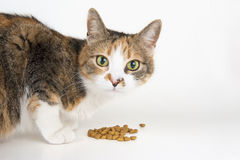 Alimentación del gato fotos de archivo libres de regalías