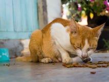 Alimentación del gato fotografía de archivo