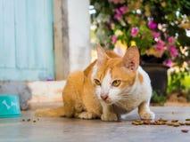 Alimentación del gato imágenes de archivo libres de regalías