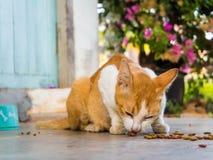 Alimentación del gato foto de archivo libre de regalías