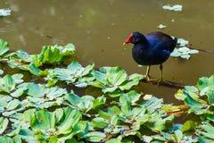 Alimentación del pájaro Imagenes de archivo