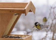 Alimentación del pájaro del invierno Fotografía de archivo libre de regalías