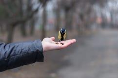 Alimentación del paro con las avellanas de la palma Imagen de archivo libre de regalías