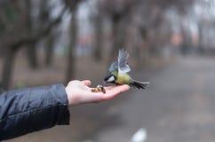 Alimentación del paro con las avellanas de la palma Fotografía de archivo libre de regalías