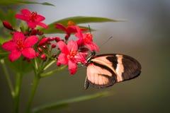 Alimentación en las flores Imágenes de archivo libres de regalías