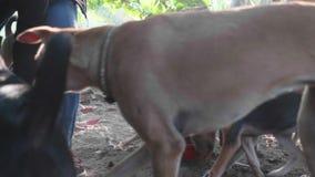 Alimentación en libra de perro Los perros hambrientos comen su comida en el santuario del perro metrajes