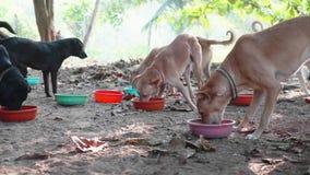 Alimentación en libra de perro Los perros hambrientos comen su comida en el santuario del perro almacen de video