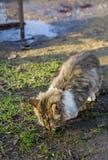 Alimentación perdida del gato Foto de archivo libre de regalías