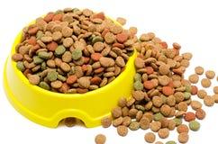 Alimentación para un gato Imagen de archivo libre de regalías