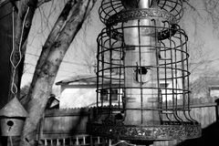 Alimentador da gaiola de pássaro Fotografia de Stock