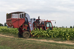Alimentador de granja Foto de archivo libre de regalías