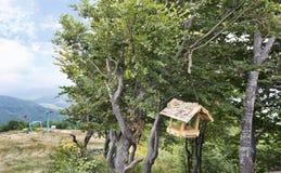 Alimentador de madeira do pássaro nos ramos de uma árvore contra um contexto de uma paisagem da montanha e de um elevador de esqu Imagem de Stock Royalty Free