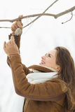 Alimentador de suspensão do pássaro da jovem mulher feliz na árvore Foto de Stock Royalty Free