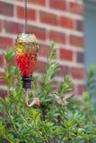 Alimentador del colibrí Imagen de archivo libre de regalías