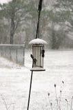 Alimentador del pájaro Fotos de archivo