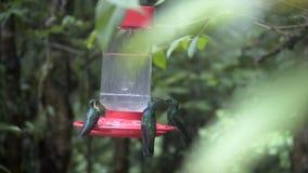 Alimentador del pájaro de Colibri almacen de metraje de vídeo