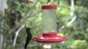 Alimentador del pájaro de Colibri metrajes