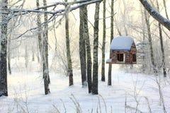 Alimentador del pájaro en bosque del invierno