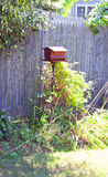 Alimentador del pájaro en patio trasero Imagenes de archivo