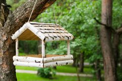 Alimentador del pájaro en un árbol en el bosque de la primavera Foto de archivo libre de regalías