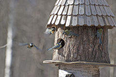 Alimentador del pájaro y cinco pájaros Fotografía de archivo libre de regalías