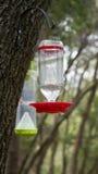 Alimentador del pájaro y trampa de la chaqueta amarilla Fotografía de archivo libre de regalías