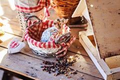 Alimentador del pájaro con las semillas en casa de campo en primavera Fotos de archivo libres de regalías