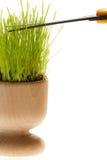 Alimentador do ovo de Easter no cabeleireiro com tesouras Imagem de Stock Royalty Free