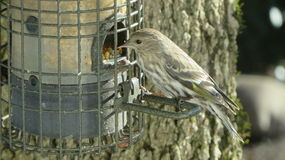 Alimentador do pássaro Fotos de Stock Royalty Free