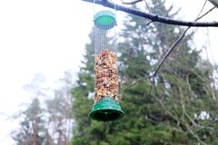 Alimentador do pássaro Imagens de Stock Royalty Free