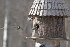 Alimentador do pássaro e cinco pássaros Fotografia de Stock Royalty Free