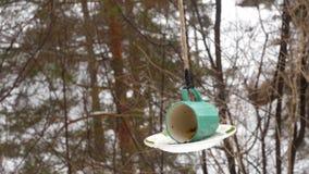 Alimentador do pássaro no parque vídeos de arquivo