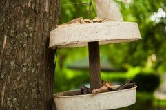 Alimentador do pássaro que pendura de uma árvore Imagens de Stock Royalty Free