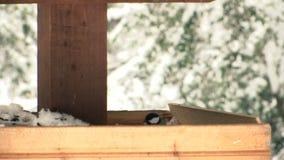 Alimentador dos pássaros no parque no movimento lento vídeos de arquivo