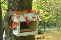 Alimentador en un árbol fotos de archivo libres de regalías