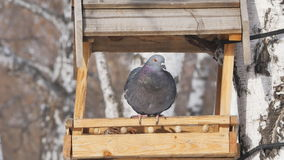 Alimentador para los pájaros en el parque en el invierno almacen de metraje de vídeo